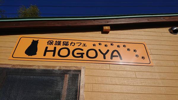 保護猫カフェOPEN!!『HOGOYA』